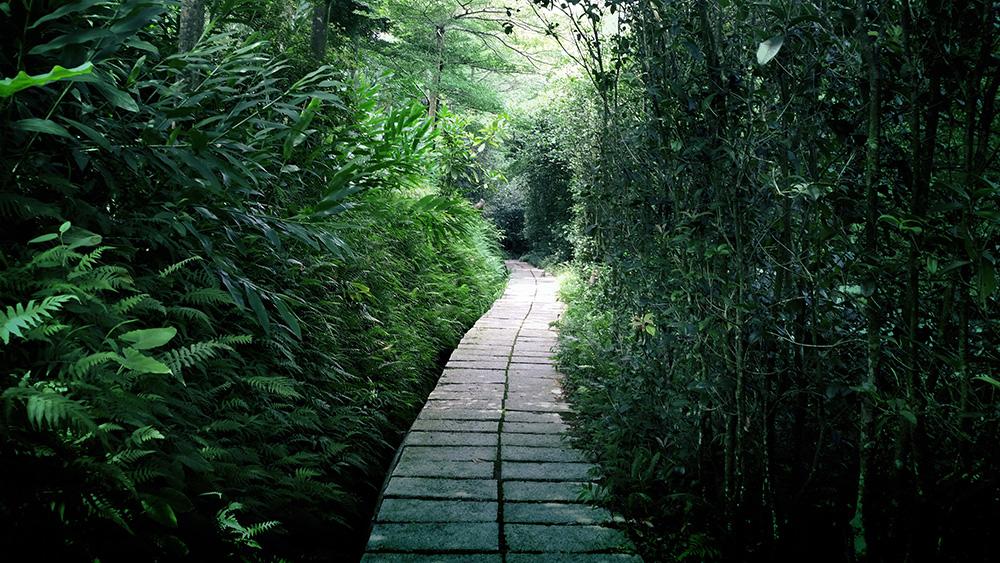 《调色篇-树林照片,森林风景照片简单微调实例》